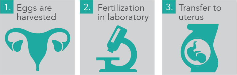 During the IVF process, we can fertilize harvested eggs before transferring them to the uterus.
